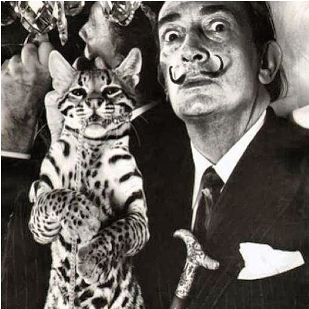 salvador_dali_savannah_cat
